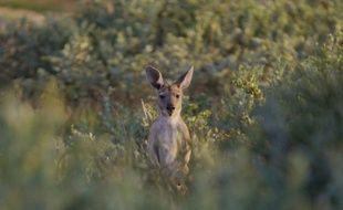 """Blogueur VIP à Sydney, soigneur de kangourous dans le """"bush"""" ou encore photographe à Melbourne: l'Australie offre cette année non pas un, mais """"six meilleurs jobs du monde"""" à des jeunes étrangers en mal d'aventure."""