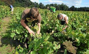 En qualité comme en quantité, la récolte s'annonce très satisfaisante.