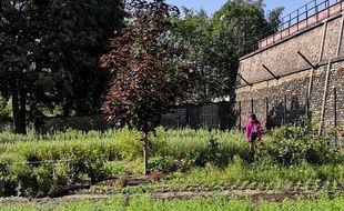 Masami Charlotte Lavault dans son champ horticole à Belleville, mardi 26 mai 2020.