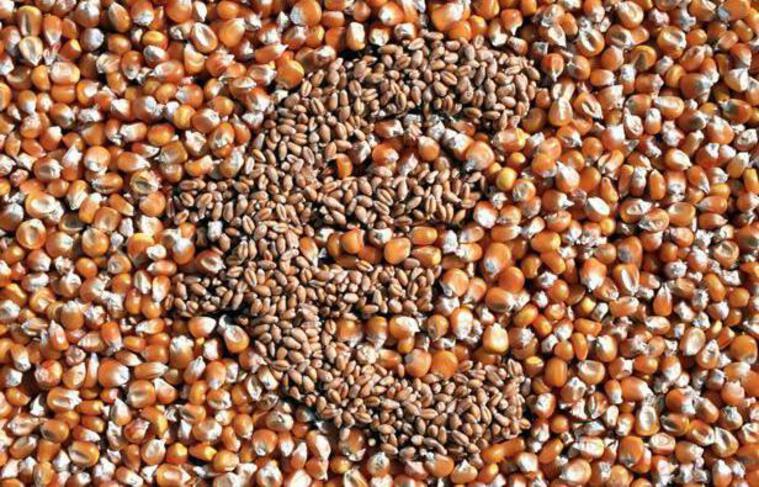 Un euro représenté avec des grains de maïs et de blé.