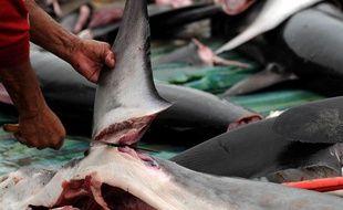 Des pêcheurs découpent des ailerons de requin, en Equateur.