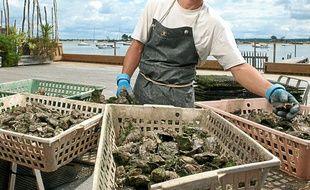 L'épidémie de gastro a épargné les huîtres du bassin d'Arcachon.