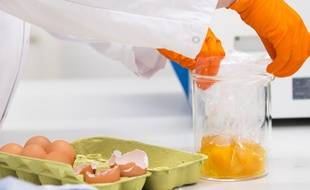 Des chercheurs hollandais effectuent depuis plusieurs jours des analyses sur des œufs contaminés au fipronil.
