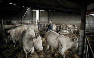 Le prix de la viande bovine a perdu 70 centimes par kilo.