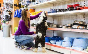 Les ventes de produits pour animaux ont connu une croissance exponentielle grâce à la crise sanitaire.