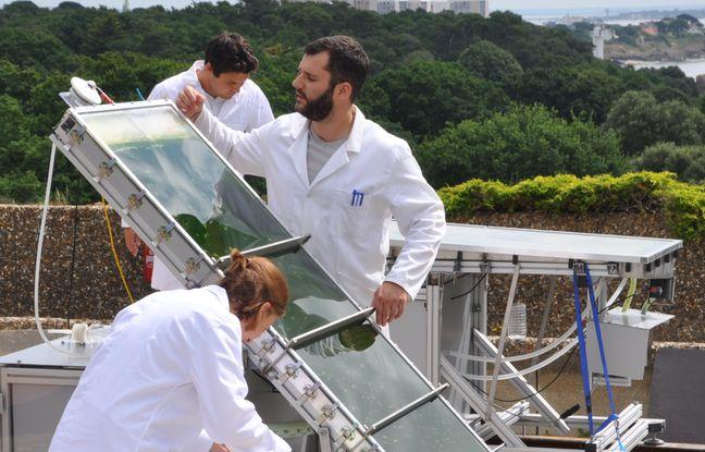La plateforme Algosolis à Saint-Nazaire - « Laboratoire GEPEA – Université de Nantes – CNRS »