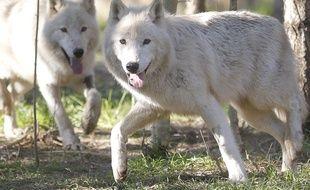 Le parc de Frossay est réputé pour ses loups blancs et gris.