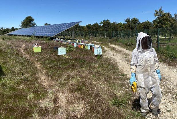 Des ruchers dans le parc solaire de La Verdière, dans le Haut-Var