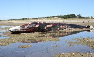 Un rorqual commun échoué sur une plage de l'Ile-de-Ré, le 25 octobre 2017
