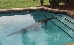 Le propriétaire d'une luxueuse villa en Floride a trouvé à son réveil un crocodile de 2,40 mètres dans sa piscine.