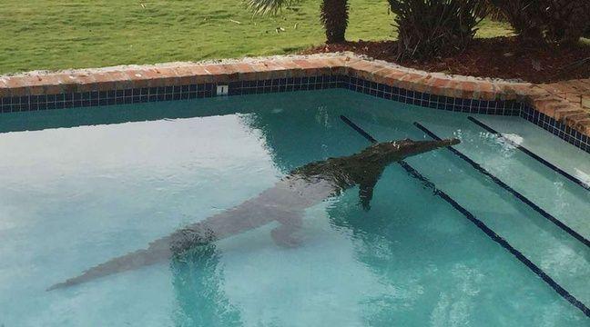Etats unis il trouve un crocodile de 2 40 m dans sa piscine for Apprendre a plonger dans une piscine