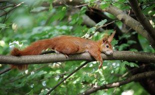 Illustration: Un écureuil se repose sur une branche.