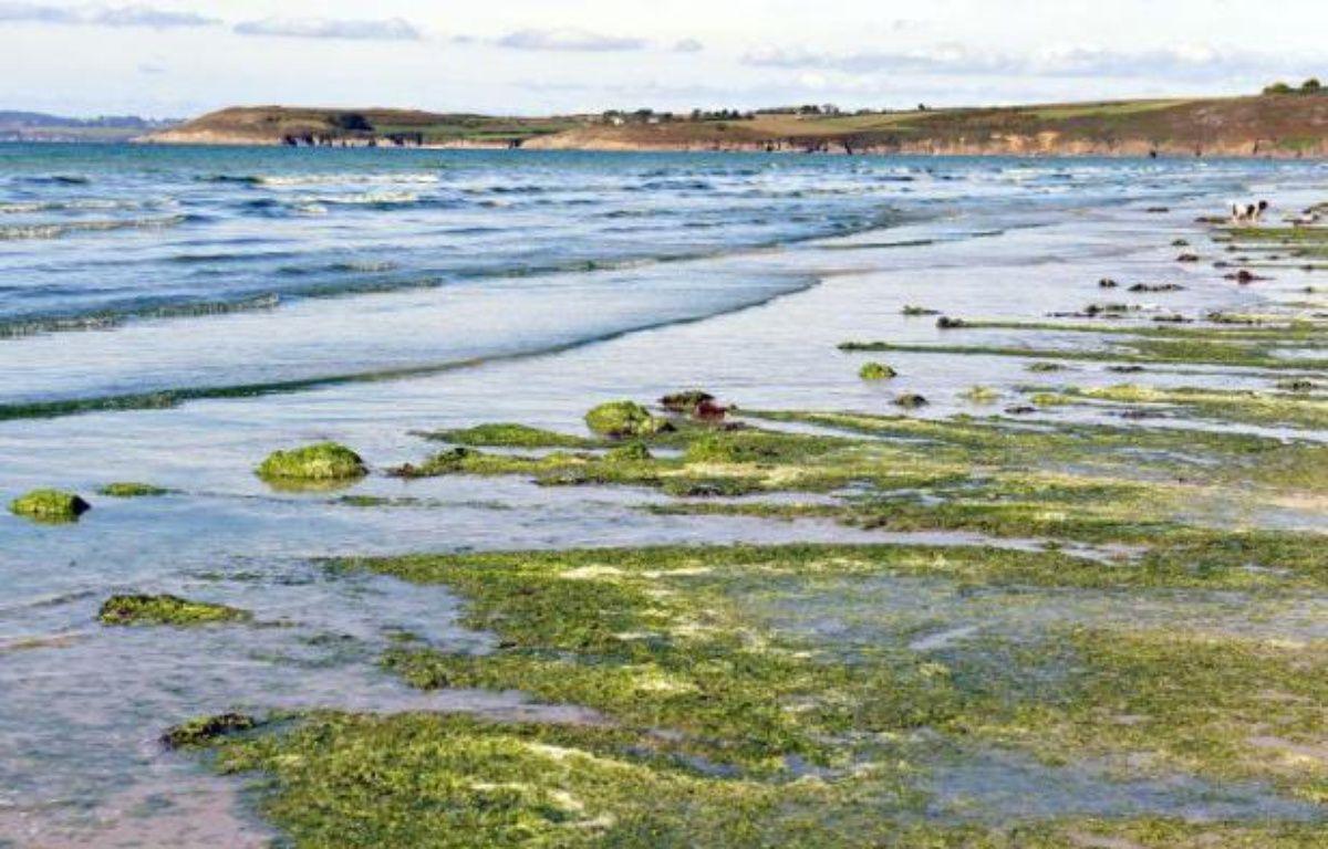 Des algues vertes sur la plage de Plonevez-Porzay, en Bretagne, en 2010 – Fred Tanneau AFP