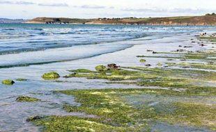 Des algues vertes sur la plage de Plonevez-Porzay, en Bretagne, en 2010