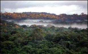 Des équipes de militaires ont entamé dimanche des recherches dans la forêt guyanaise pour retrouver deux randonneurs français originaires de métropole disparus depuis mi-février dans une zone isolée du centre du département.
