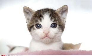 Illustration d'un chaton.