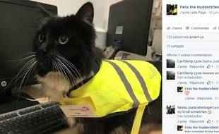Felix le chat travaille dans une station de train anglaise, à Huddersfield.
