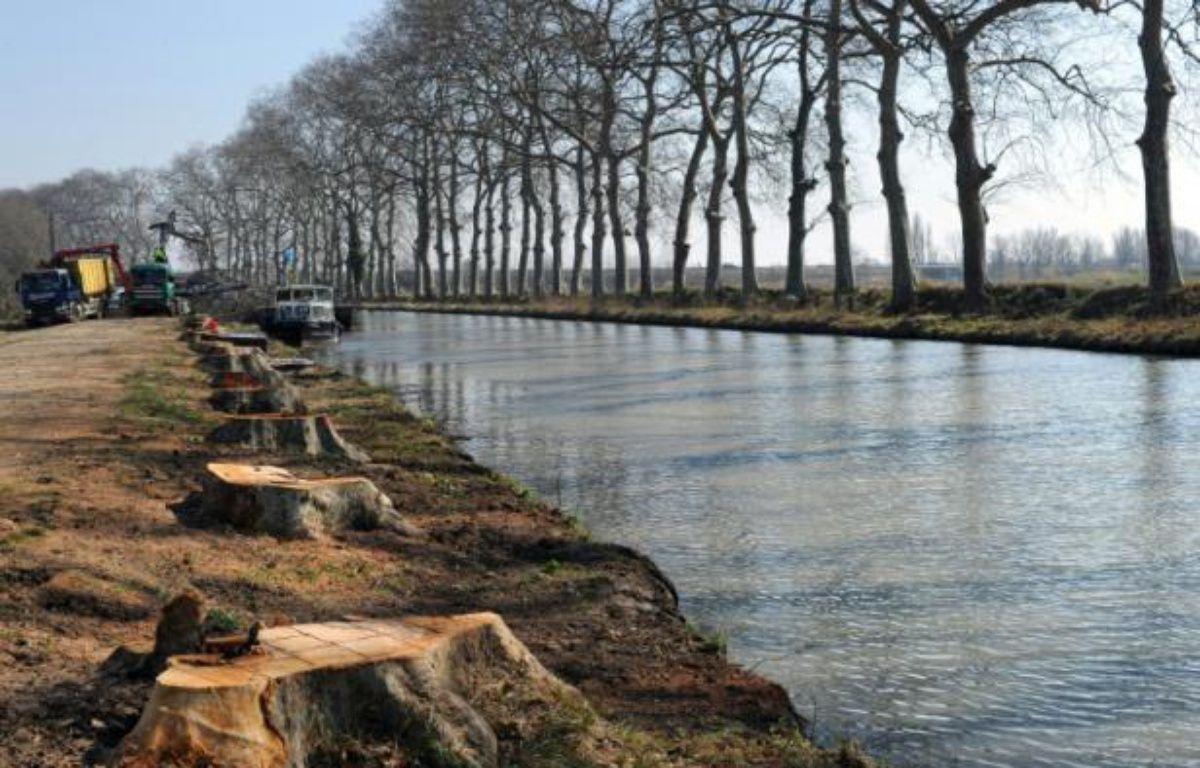 Des troncs de platanes le long du canal du Midi, le 1er mars 2012 – Pascal Guyot AFP