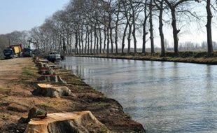 Des troncs de platanes le long du canal du Midi, le 1er mars 2012