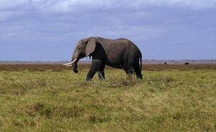 Une lourde opération débutera dimanche pour déplacer une dizaine d'éléphants, en conflit avec les agriculteurs locaux, du centre de la Côte d'Ivoire vers le sud, ont annoncé jeudi les autorités ivoiriennes.