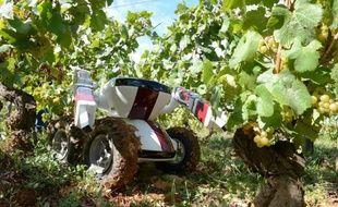 Un GPS dans la tête, deux bras, quatre roues, six caméras et une capacité de taille de 600 pieds de vigne par jour: un robot vigneron fait son entrée sur le marché du travail, mais, rassure son concepteur, c'est pour compenser un déficit de main-d'oeuvre.