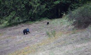 Capture d'écran de la vidéo d'Aaron Smith, montrant une ourse avec la tête bleue.