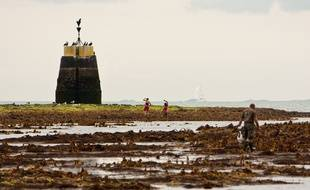 Des promeneurs sur une plage de Bretagne où sont échouées des algues.