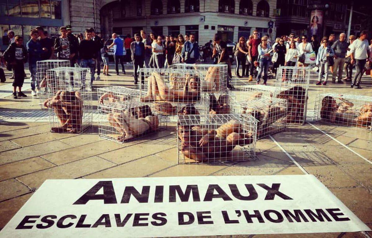 Quatorze femmes se sont enfermées dans des cages pour protester contre l'exploitation animale. – Sadiki Sophie