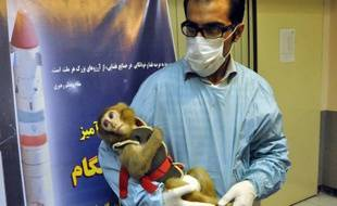 Une photo prise le 30 janvier 2013 du premier singe qui aurait été envoyé par l'Iran dans l'espace et serait revenu vivant.