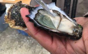 L'huître du Médoc est affinée dans les marais médocains.