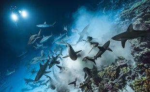 Laurent Ballesta a passé des nuits avec les requins, en Polynésie.