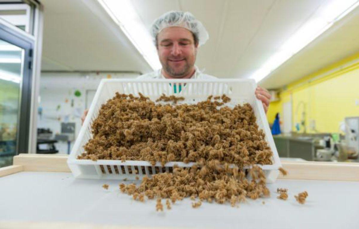 """Un employé de l'usine """"L'Atelier à pâtes"""" montre des pâtes fabriquées à base d'insectes, le 8 février 2016 à Thiéfosse (Vosges) – JEAN-CHRISTOPHE VERHAEGEN AFP"""