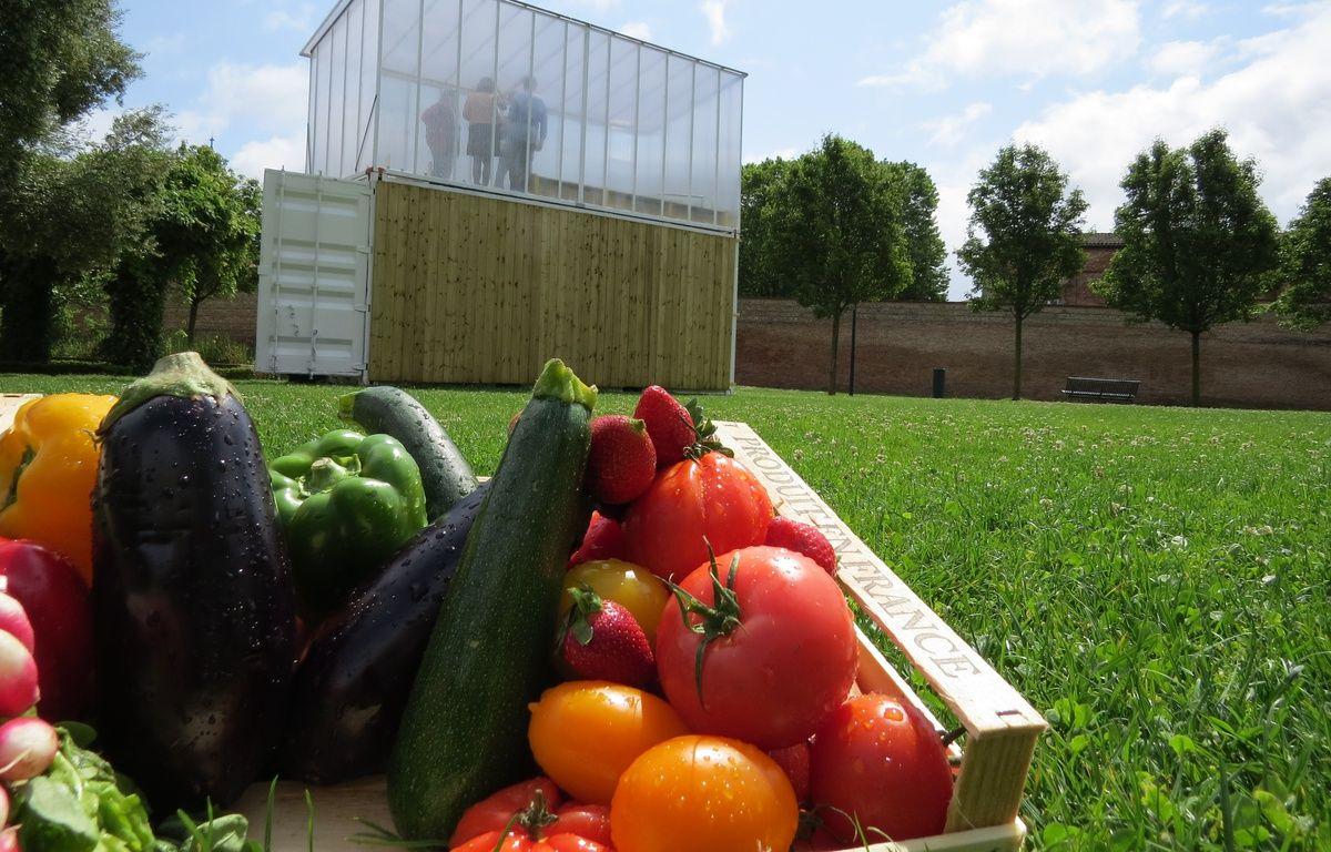 La première ferme urbaine où sont cultivés des légumes grâce à la technique de la culture aquaponique est expérimentée au Jardin Raymond VI, à Toulouse, par Citizen Farm. – B. Colin / 20 Minutes