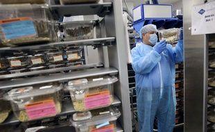 Illustration de souris de laboratoire au sein d'une unité de recherche en oncologie.