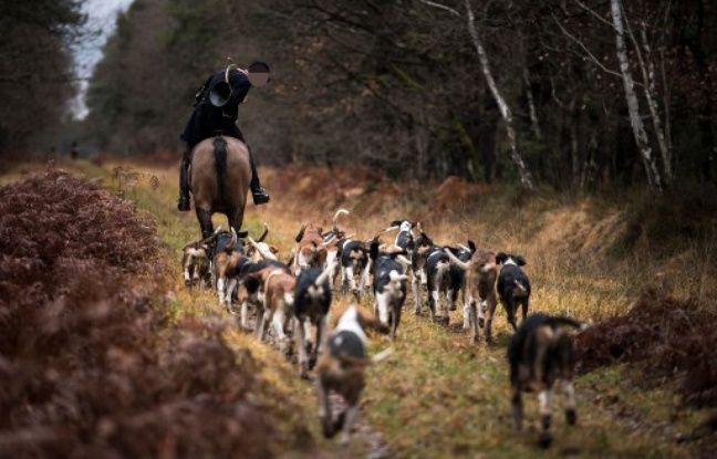 Femme tuée par des chiens: Le chef de la chasse à courre placé sous statut de témoin assisté