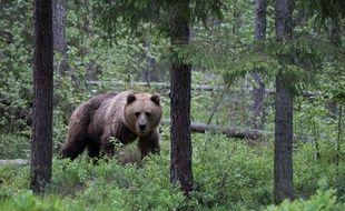 Photo d'illustration d'un ours.