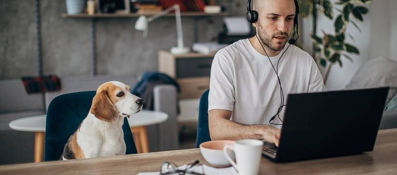 One man, young man sitting on sofa at home, working on laptop, wearing headset, his pet dog is sitting next to him on sofa.