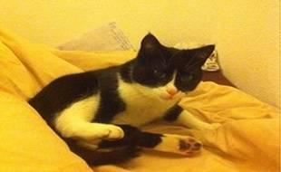 Le chat Pichkoune avait disparu lors d'un accident fin février.