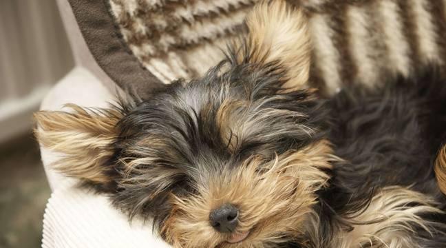 gu rande les cambrioleurs repartent avec deux chiens des canaris et des cailles. Black Bedroom Furniture Sets. Home Design Ideas