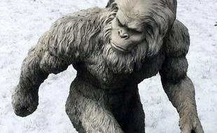 Dans le Montana, un homme a tiré sur un chasseur qu'il a confondu avec Bigfoot.
