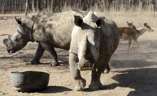 Le premier orphelinat pour rhinocéros vient d'ouvrir ses portes en Afrique du Sud, dans l'espoir de recueillir et de rendre à la vie sauvage ces bébés dont les mères sont de plus en plus victime des braconniers.