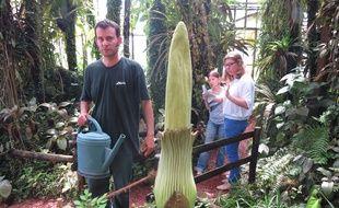 Nantes: La plus grosse fleur du monde crée l\'excitation