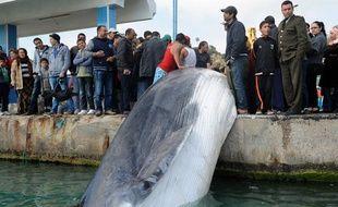Une baleine de dix mètres a été remontée par un pêcheur tunisien le 9 mars 2014.