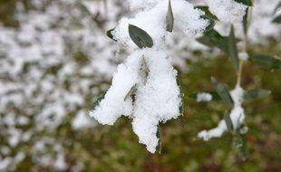 De la neige sur un arbre, le 23 janvier 2019 (image d'illustration).