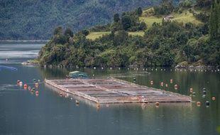 Un élevage de saumons au Chili. (illustration)