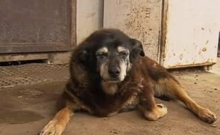 Maggie, qui pourrait être le chien le plus vieux du monde, est morte à 30 ans le 18 avril 2016, en Australie.