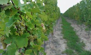 Strasbourg: Trois secrets ou histoires insolites à connaître sur le vignoble (Illustration)