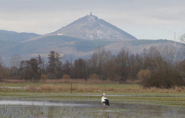 Vacances près de Strasbourg: Lacs, réserves naturelles, art urbain... Cinq idées originales à moins de 100 km