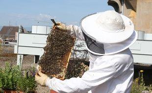 Un apiculteur (illustration)