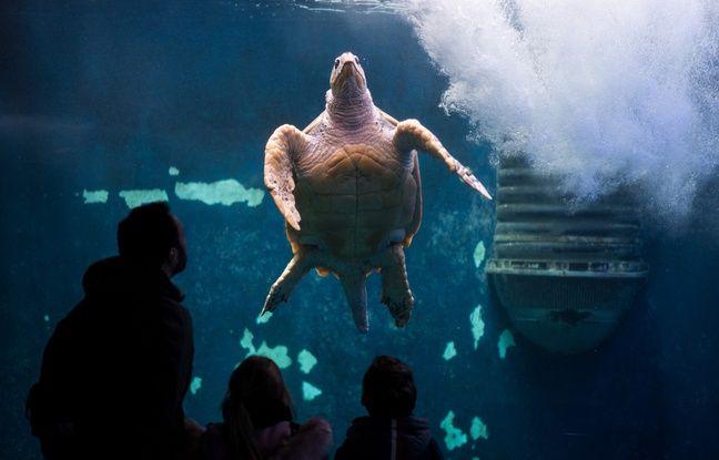 Mayotte: Des braconniers de tortues condamnés à deux ans de prison ferme